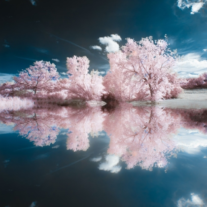 Pink Reflection